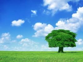 Условия для пробуждения родовой памяти и создания крепкой любящей семьи